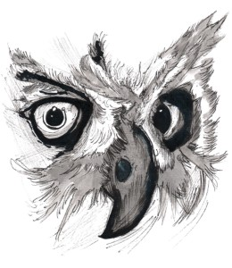 Owl Look