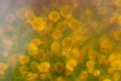 Flowers Through the Haze