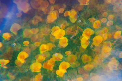 Flowers Through the Rainbow Haze