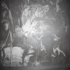 Tiger Vibes
