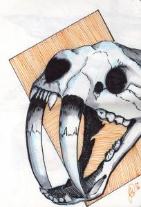 Sabertooth Skull