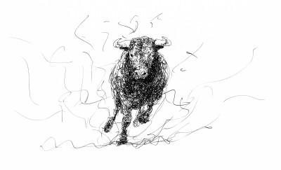 Bull Doodle