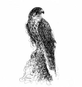 Falcon Doodle