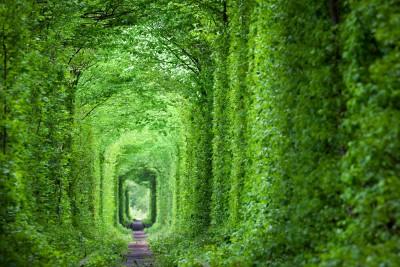 Sunlit Garden Path