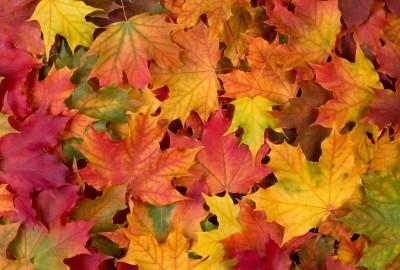 Fall Leave