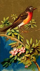Robin's Perch